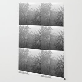 Black and white autumnal naked trees surrounded by fog Wallpaper