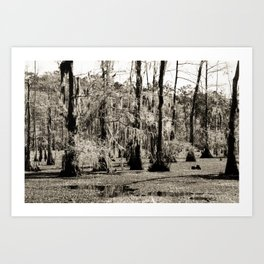 For the Love of Cypress Trees and Swamps Art Print