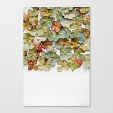 Hydrangea Petals no. 2 Canvas Print
