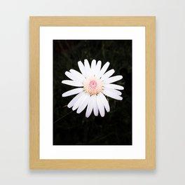 Daring Daisy Framed Art Print
