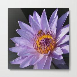 Evening Nymphaea Metal Print