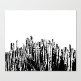 Cactus Garden IV Canvas Print