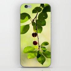 Cherries 5318 iPhone & iPod Skin
