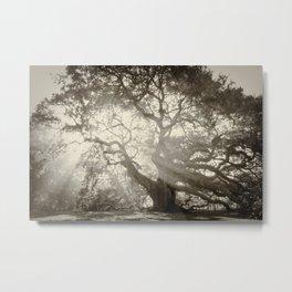 Angel Oak Mist Metal Print