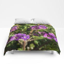 Notch-Leaved Phacelia - Desert Wildflower Comforters