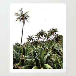 Palm Trees of Lord Howe Island Art Print