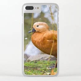 Tadorna Ferruginea Clear iPhone Case