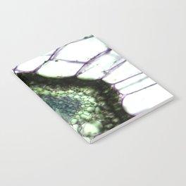 CAPSULE III Notebook
