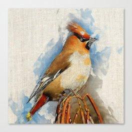 Watercolor Bird - Bohemian waxwing(Bombycilla garrulus) Canvas Print
