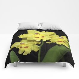 Glorious Golden Orchid - Odontonia Yellow Parade Alpine Comforters