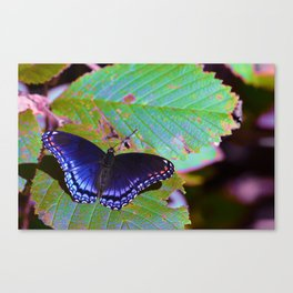 We will all soon add color to our wings  Canvas Print