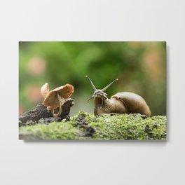 Wifi Snail Metal Print