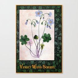 Violet Wood Sorrel Canvas Print