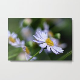 flower with raindrops  Metal Print