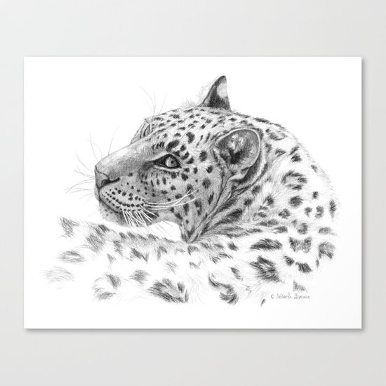 Leopard - Glance back Canvas Print