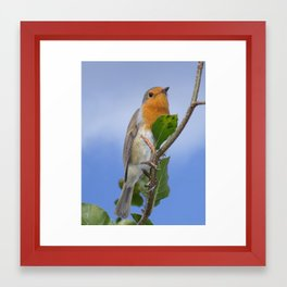 Robin Red Breast Framed Art Print