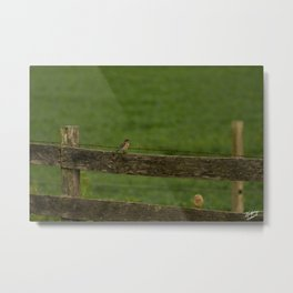 Bird on the Fence Row Metal Print