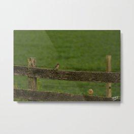 Bird on the Fence Row Metal Print