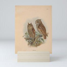 scops balli Mini Art Print