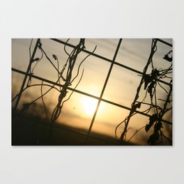 'Through The fence' by TDL Canvas Print