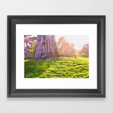 Sunshine Makes Me Happy Framed Art Print