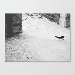 Willy wag tail Canvas Print