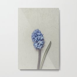 One Light Blue Hyacinth Metal Print
