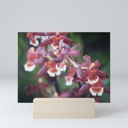 Longwood Gardens Orchid Extravaganza 77 Mini Art Print