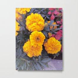 Yellow Tagetes Metal Print