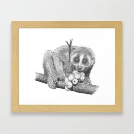 Slow Loris (Kera Duku) Framed Art Print