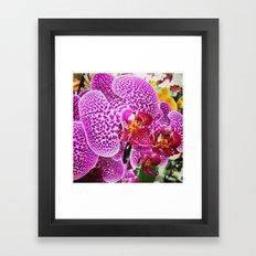 Orderly Orchids Framed Art Print