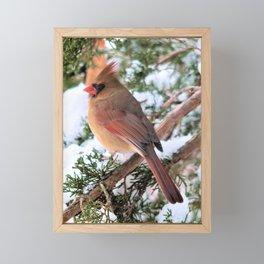 Cardinal Sitting Pretty Framed Mini Art Print