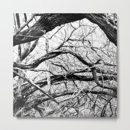 Mangled Tangled Woods. Diamond Head Crater B&W Metal Print