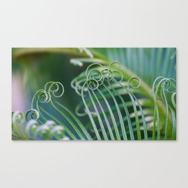 Palm frond spirals Canvas Print