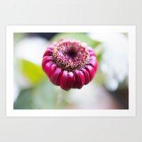 Unknown Flower Art Print