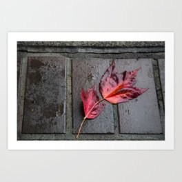Red Maple Bricks Art Print