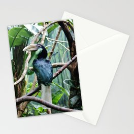 Female Hornbill Stationery Cards