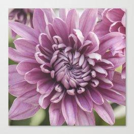 Soft Pink Mum, Nature Photography, Flower, Floral Print, Flower Print, Nature Print, Macro Art Canvas Print