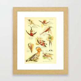 William Playne Pycraft - A Book of Birds (1908) - Plate 22: Hummingbirds Framed Art Print