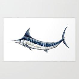 Blue Marlin (Makaira nigricans) Kunstdrucke