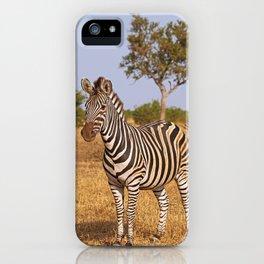 Zebra - Africa wildlife iPhone Case