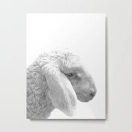 Black and White Sheep Metal Print