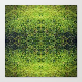 ~°* Tantalizing 《¤》 Mosswork°//*Textures *°~ Canvas Print