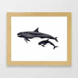Pygmy killer whale Framed Art Print