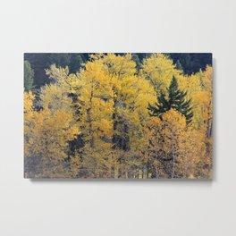 Cottonwood Creek Metal Print