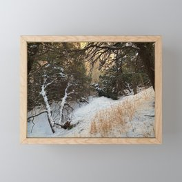Carson Forest  Framed Mini Art Print