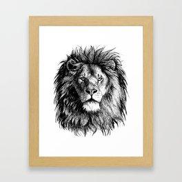African Lion Framed Art Print