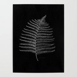 New Zealand Fern Leaf Poster