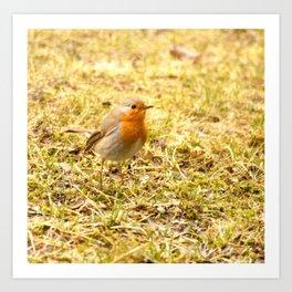 Hello Robin! Art Print