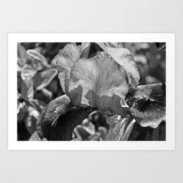 B&W Iris Art Print
